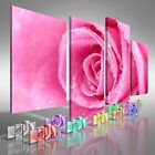 Floral Rose Flower Close Offset Canvas Print Large Picture Wall Art