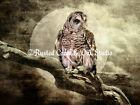 Barred Owl Against Full Moon Matted Picture Home Wall Art Interior Decor A270