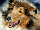 """Rough Collie Lassie Dog Art Print of Watercolor Painting Wall Art """"In the Rough"""""""