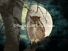 Great Horned Owl Against the Moon Matted Photo Picture Wall Art Choose Size A138