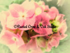 Pretty Pink Hydrangea Flower Matted Picture Art Print A441