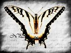 Tiger Swallowtail Butterfly Matted Picture Art Print A475