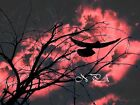 Once Upon A Stormy Night Matted Picture Art Print A480 Bird Tree