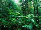 AMAZON RAINFOREST GLOSSY POSTER PICTURE PHOTO rain forest jungle leaf green 252