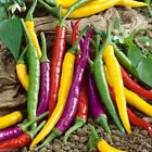 Cayenne Pepper Hot Mix A fiery mix of red yellow purple green and orange