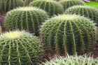 CACTUS COMPOST, CACTI SOIL, FOR REPOTTING PLANTS, SEEDS AND SUCCULENTS IN POTS