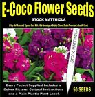 STOCK MATTHIOLA UMBRELLA SEEDS, 50 SEEDS IN EACH PACKET