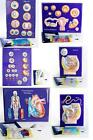 Scientific Model Sets 3D Plaques Human Reproduction Mitosis Meiosis Circulatory