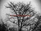 Foggy Morning, Crow in Tree B&W Original Signed Handmade Matted Picture A790