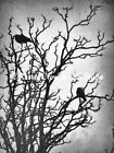 Rustic Crows in a Tree Original Signed Handmade Matted Picture Art Print A465