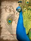 Pretty as a Peacock Bird Original Signed Handmade Matted Picture Art Print A686