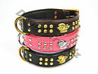 ENGLISH BULL TERRIER LEATHER DOG COLLAR PADDED BRASS BLACK BROWN PINK