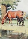 "Cecil Aldin ""Black Beauty"" No. 02  of 18"