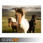 ICELAND HORSES (3813) Animal Photo Picture Poster Print Art A0 A1 A2 A3 A4