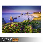 COSTA QUEBRADA CANTABRIA (3818) Animal Photo Picture Poster Print A0 A1 A2 A3 A4
