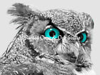 Modern Black White Grey Owl Bird Aqua Blue Eyes Home Decor Matted Picture A174