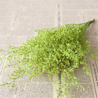 Dried Bouquets Natural Dried Flowers DIY Living Room Decoration Flowers 1 Bunch