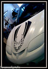 Universal Hood Bird Phoenix Decal decals graphic fits Pontiac Trans Am
