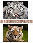 TIGER AFRICAN SIBERIAN CUTE AMAZING MOUSE MAT PAD MOUSEMAT BIRTHDAY NEW ANIMAL