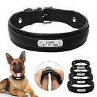 Leather Personalized Dog Collars for Big Dogs Padded X-Large Dog Collar Pit Bull