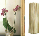 Bamboo Wooden Plant Sticks 25-100 X 41cm Garden Plants Support Canes Flower Cane