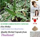 Sea Holly Acanthus Ebracteatus Asthma Pressure Elixir Treatment  Herb Capsules