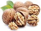Walnut Tree Seeds The Pecan Seeds Healthy Nuts Year Results American Walnut Seed