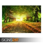 AUTUMN PATH (AE059) NATURE POSTER - Photo Picture Poster Print Art A0 to A4