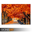 ORANGE TREES FALL (AE073) NATURE POSTER - Photo Poster Print Art A0 A1 A2 A3 A4