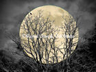 Tree Crow Bird Full Moon (Colors) Grey Surreal Art Print Matted Picture USA A150