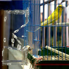 Large Clear Acrylic Pets Parrot Bird Automatic Cage Accessories DIY Feeder