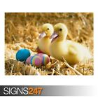 DUCKLINGS PAIR (3420) Animal Poster - Picture Poster Print Art A0 A1 A2 A3 A4