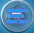 MEDIUM Blaptica Dubia Roaches, BEST PRICE, HEALTHIEST FEEDERS