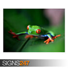 RED-EYED TREE FROG MACRO (AE913) - Photo Picture Poster Print Art A0 A1 A2 A3 A4