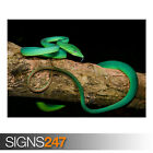 GREEN ORIENTAL WHIP SNAKE TREE (AE920) - Photo Picture Poster Print Art A0 to A4