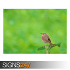 LITTLE BIRD (AE922) - Photo Picture Poster Print Art A0 A1 A2 A3 A4