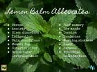 All Natural Organic Lemon Balm Leaf Cut and Sifted (Melissa Officinalis)