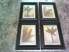 5x7 Tropical Pictures Coconut Palm Trees Leaves Wall Hangings