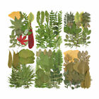 Pressed Dried Flowers Leaves Filling For Epoxy Resin Craft Jewelry Making DIY