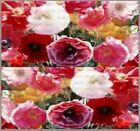 1,200 Cascade Pocket Poppy Mix Flower Seeds ~ California, Red, Iceland, Shirley