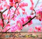 BULK Japanese Flowering Apricot Plum Prunus Triloba Tree Seeds  Chinese New Year