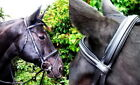 FSS Posh Silver German COMFORT Poll PADDED Simple Caveson Flash Dressage BRIDLE