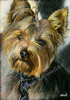 A4 A3 or A2 Yorkshire Terrier Art Print of Original Pencil Drawing - RussellArt