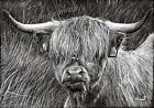 Highlander A4 A3 A2 print of wildlife highland cow cattle drawing by RussellArt