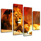 MA039 Lion and Lioness Resting Canvas Art Multi Panel Split Picture Print