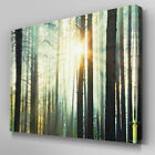 C392 Forest Treeline Sunshine Canvas Wall Art Ready to Hang Picture Print