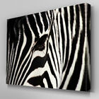 A058 Zebra Face Eye Staring Canvas Art Ready to Hang Picture Print