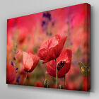 FL082 Red Poppy Field Floral Canvas Wall Art Ready to Hang Picture Print