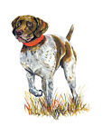 German Short Haired Pointer Dog Home Office Room Camp Decor Decal Wall Art Gift