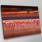 A543 Orange Sky Flock of Flamingos Canvas Wall Art Animal Picture Large Print
